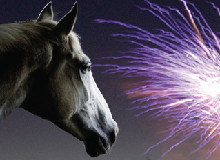 5 ways to survive Bonfire Night with your horse