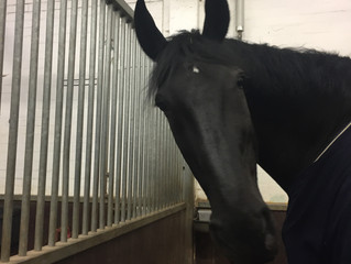 Losing a horse - the greatest pain?