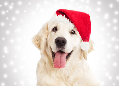 dog portrait in the New Year and Christm