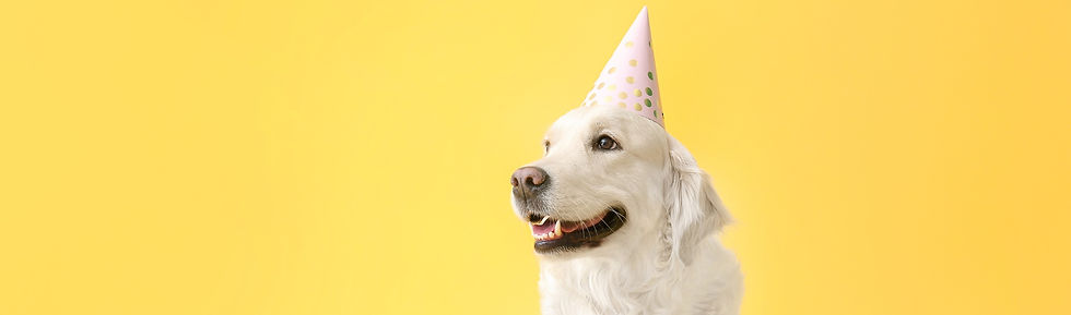 Cute%2520dog%2520in%2520party%2520hat%25