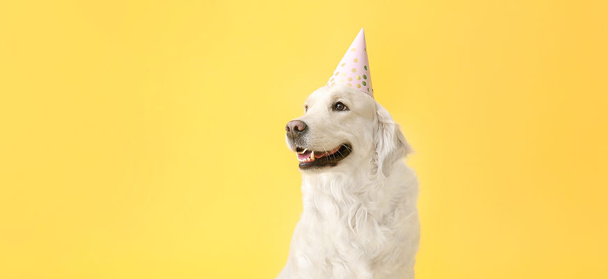 Cute%20dog%20in%20party%20hat%20on%20col