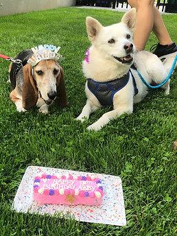Barktastic Birthday Bundle - 7 Inch Bone Cake