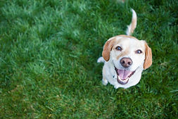 Dog playing outside smiles.jpg