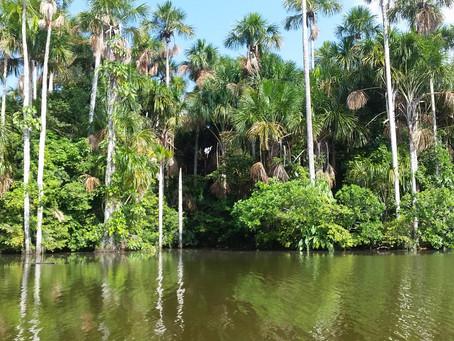 Exporing the Amazonas Jungles