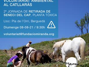 SOS!! ACTUACIÓ URGENT DE VOLUNTARIAT AMBIENTAL AL CATLLARÀS ⚠️RETIRADA DE SENECI DEL CAP