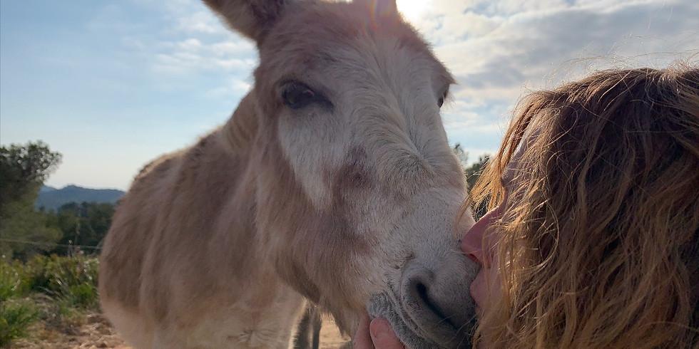 ANIMAL WELFARE TALK. HORSE STORIES.