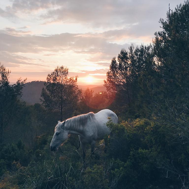 Sunset entre cavalls lliures al Parc del Garraf