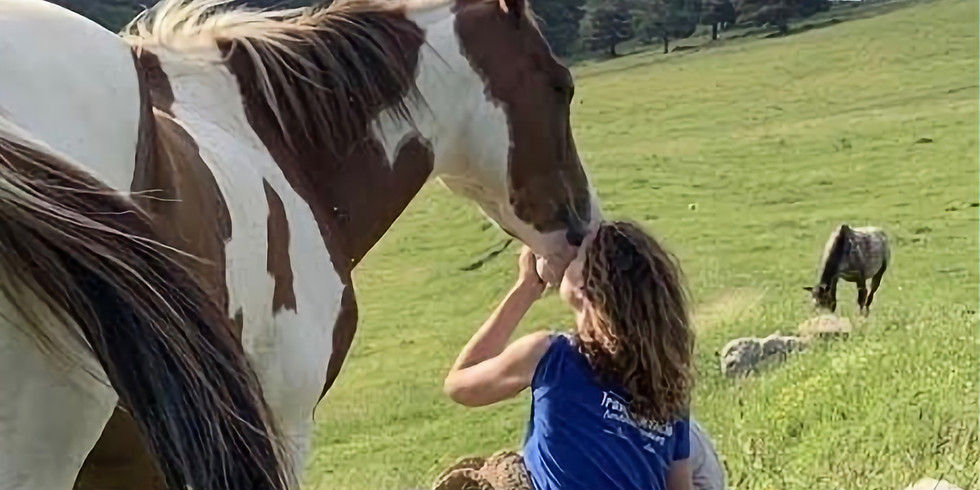 RETIRE: Yoga between horses.