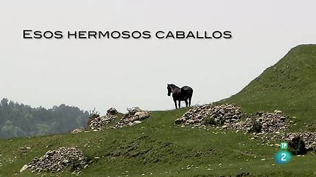 ESOS HERMOSOS CABALLOS.png