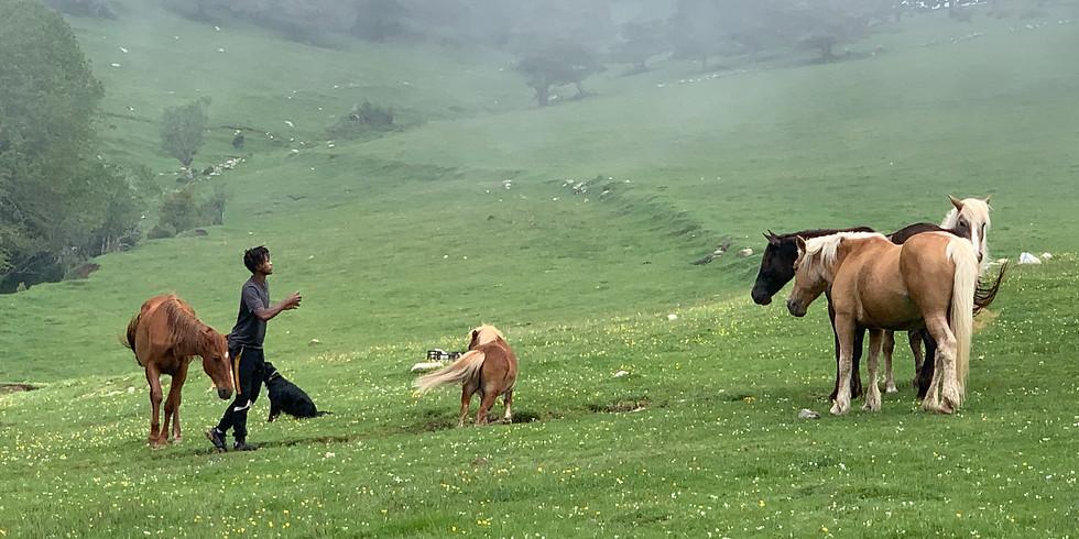Socias y Madrinas entre caballos libres. Pla de l' Orri