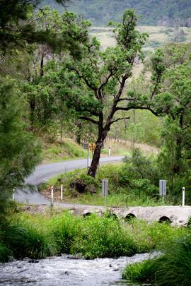 'Lions Road' Tourist Drive