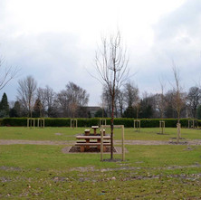 New picnic area and new tree planting in Dalmuir Park.  -  12th February 2013