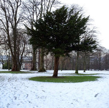 Dalmuir Park in the snow.  -  20th January 2015