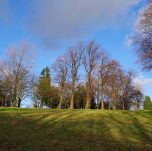 A winter walk in Dalmuir Park, a bit of excercise but keeping social distancing due to Covid-19. some of my favourite trees in the park.  -  22nd January 2021