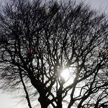 Winter sun through the trees.  -   Dalmuir Park.  -  22nd January 2021