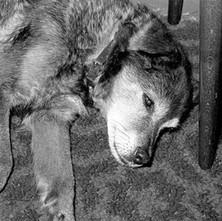 Candy, having a rest. 4th July 1978