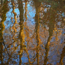 Tree reflections in the Lade that feeds the duck pond, in Dalmuir Park.  -  1st January 2021