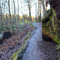 The path up by the Lade, a large tree had to be cut up as it fell over blocking the path. Dalmuir Park.  -  1st January 2021