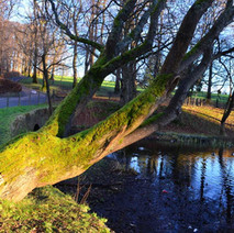 The Duck Pond in the winter sun, Dalmuir Park.  -  1st January 2021