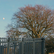 The moon in the sky, looking down on Goldenhill Park. This is the fence that protects the stone base of the Antonine Wall built by the Romans . Construction began in AD 142 at the order of Roman Emperor Antoninus Pius, and took about 12 years to complete.  -  23rd January 2021