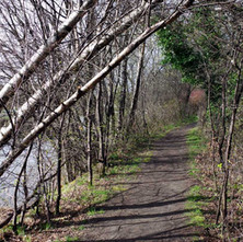 A walk along the canal side at Dalmuir.  -  23rd March 2019