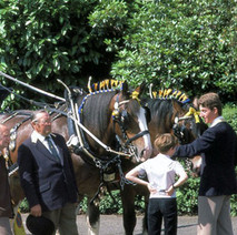 The Coalite horses and cart in Parkhall. Clydebank Centenary Celebrations 1986 - photo by Sam Gibson