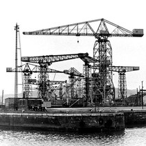 A good collection of cranes. - 8th March 1980