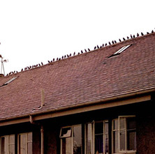 Birds on the roof of Low Crescent. - Whitecrook, Clydebank. August 1981