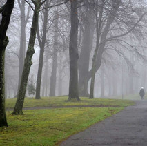A misty morning walk through Dalmuir Park.  -  14th January 2014