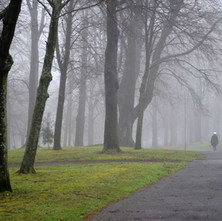 A misty morning walk through Dalmuir Park.  -  14th January 2014