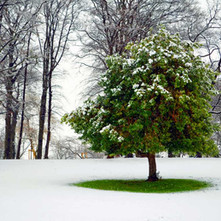 Snow came to Dalmuir Park. It all looked very pretty.  -  13th February 2013