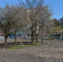 Only the trees left after the demolition. - 18th April 2014