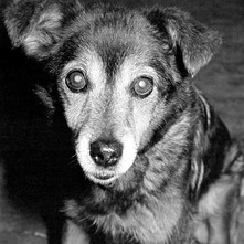 This is Candy, my twin sister got her as a present but we all looked after her. She was a great dog. 4th July 1978
