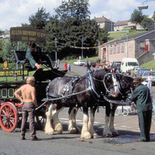 The Alloa Brewery horses and cart in Parkhall. Clydebank Centenary Celebrations 1986 - photo by Sam Gibson