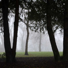 A misty morning walk through Dalmuir Park before going to the Art Class. - 14th January 2014