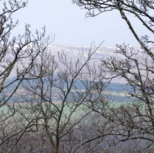 A wintery scene, the Old Kilpatrick Hills through the trees in Dalmuir Park.  -  12th February 2013