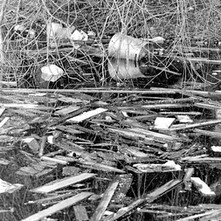 Driftwood & rubbish collected at the lock gates because the canal was no longer a working canal. - 8th March 1980 Dalmuir