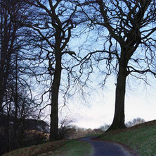 winter trees in Goldenhill Park.  -  23rd January 2021