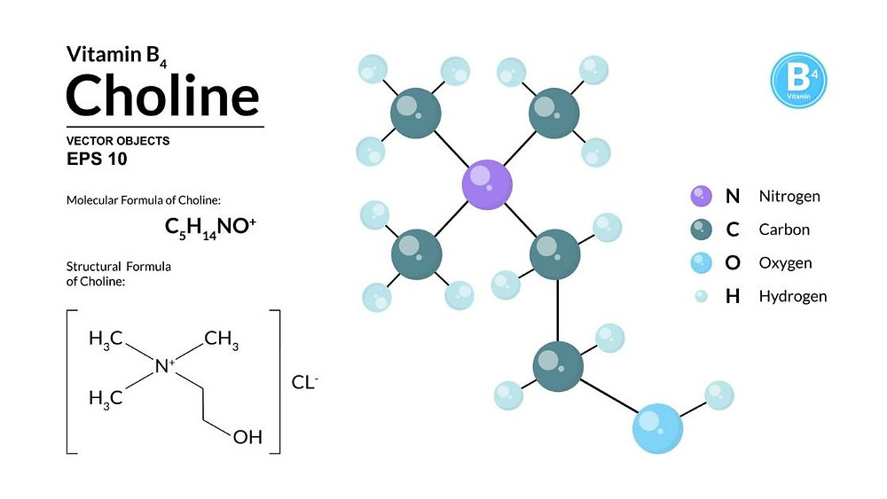 what is choline