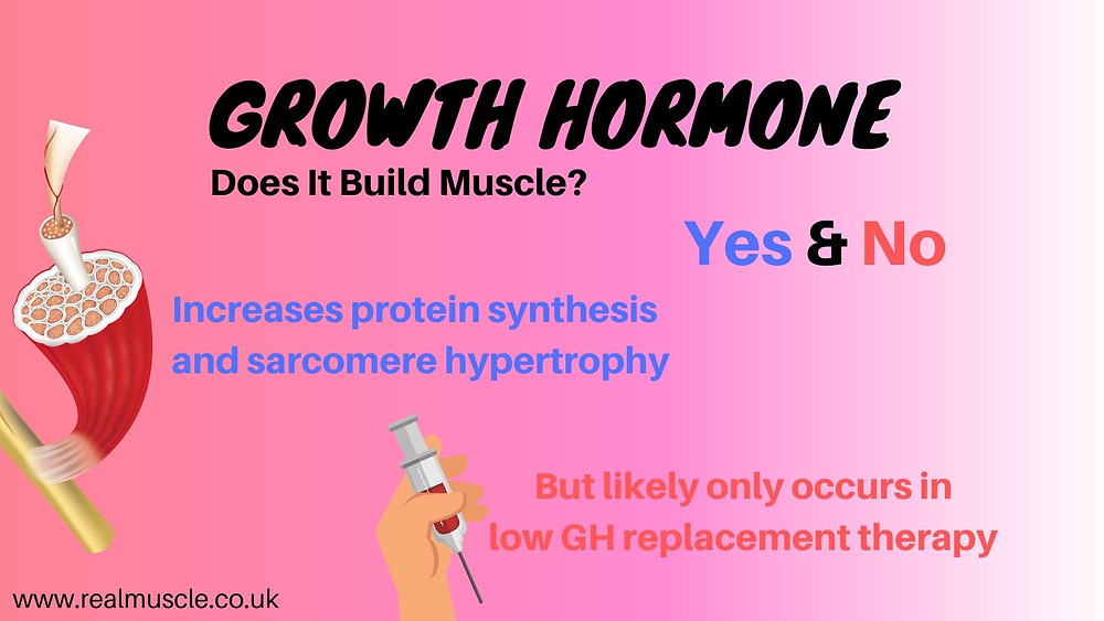 does growth hormone build muscle infographic