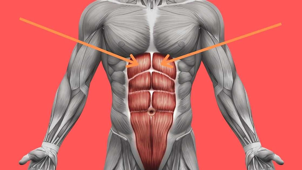 upper abs and six pack image