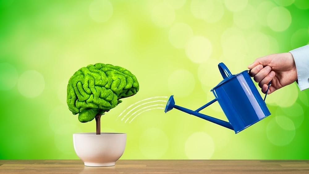 creatine improves brain health