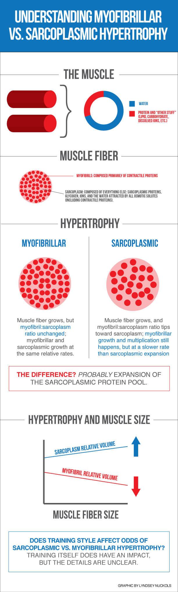 Sarcoplasmic hypertrophy vs myofibrillar hypertrophy infographic