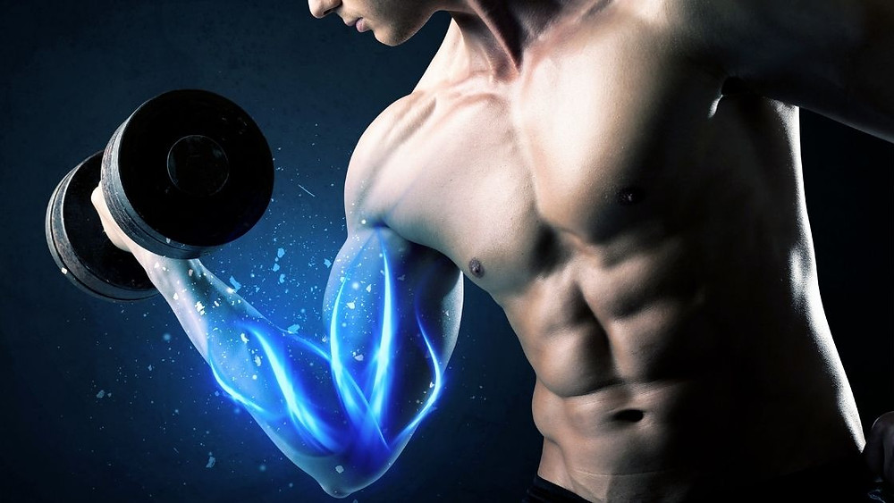 creatine increases muscle