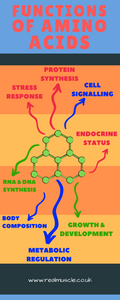 protein functions in the body infographic