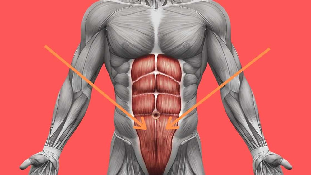 six-pack and lower abs image