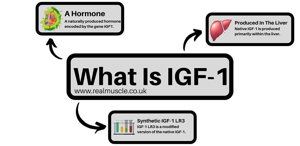 what is igf 1