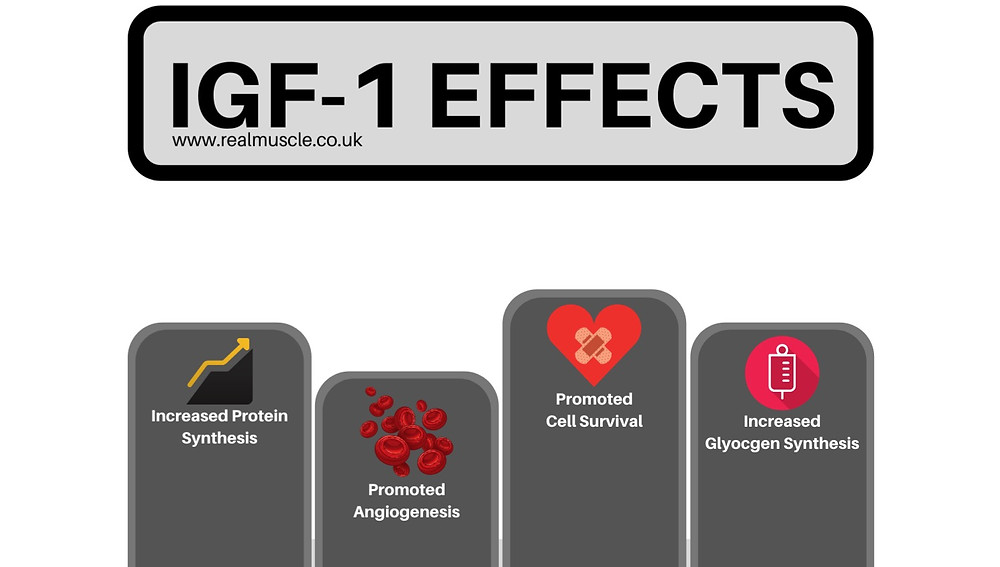 igf 1 effects infographic
