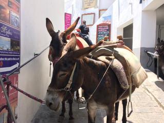 Animal Tourism