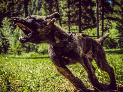 Facilitate the Wild : Encouraging Primal Balance In Your K9